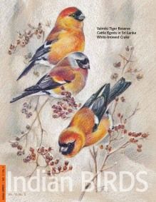 IB_11.3_Cover_page