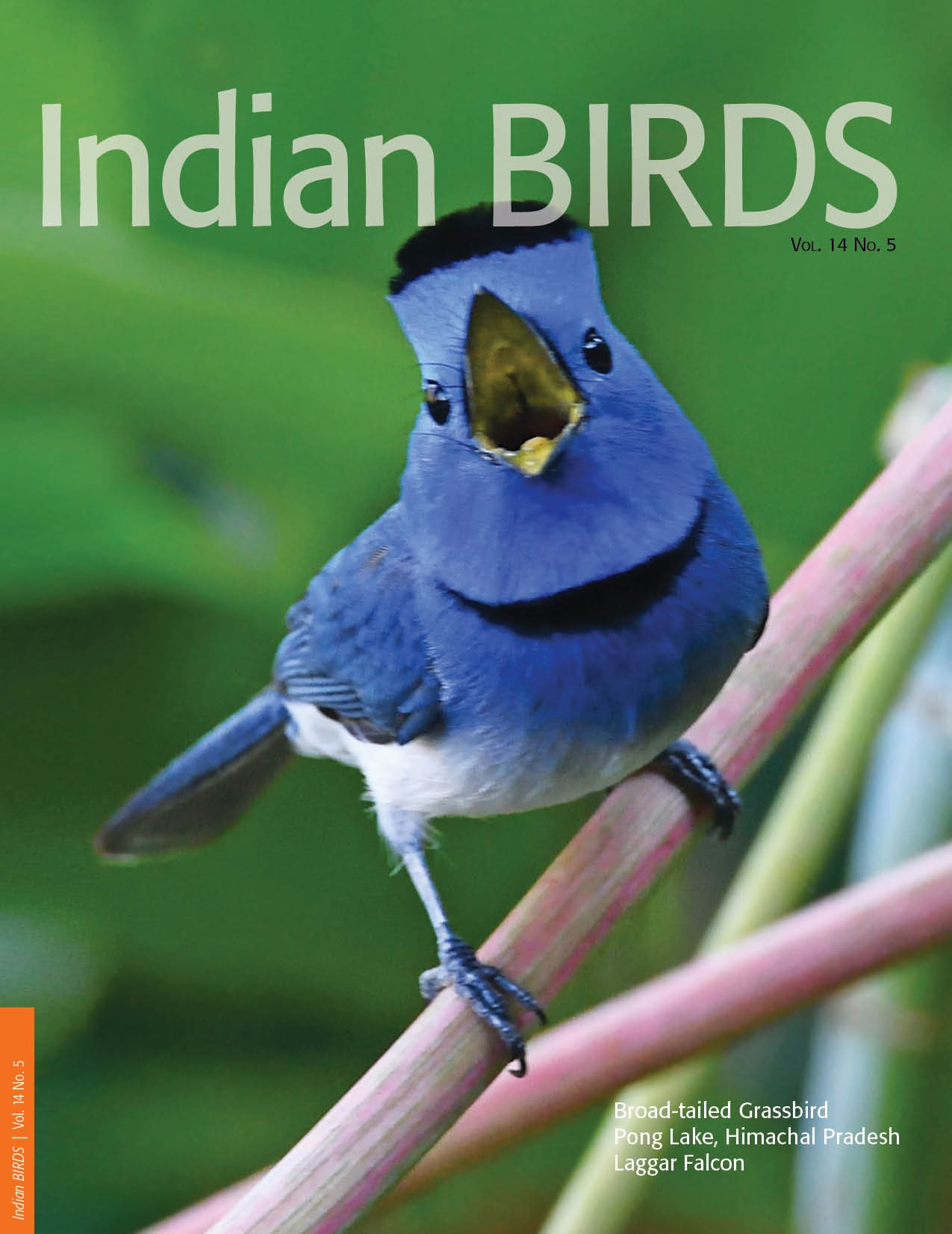 Influence of water on birds and insect pests in the paddy fields of Kannur district, Kerala